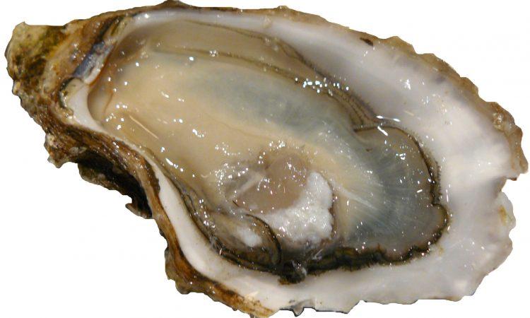 ชนิดของหอยนางรม