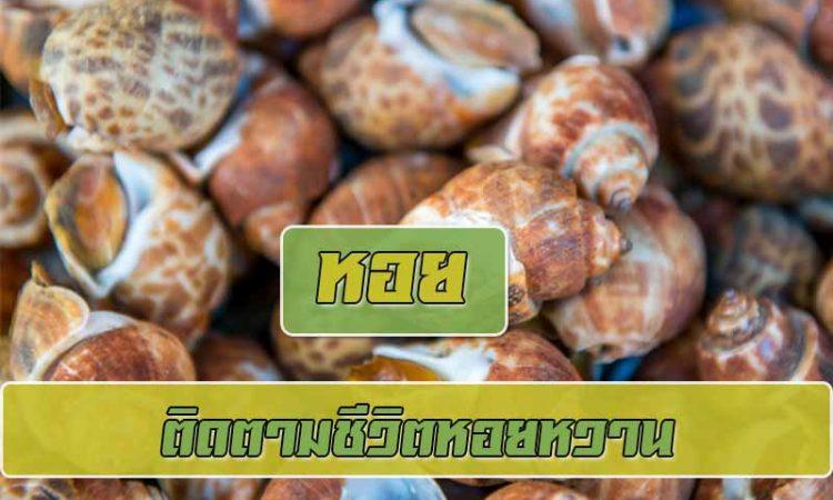 หอยหวานเป็นหนึ่งในหอยทากทะเลที่สำคัญที่สุดของประเทศไทย